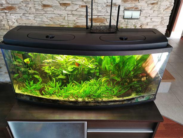 Akwarium panorama 220l z roślinami i rybami