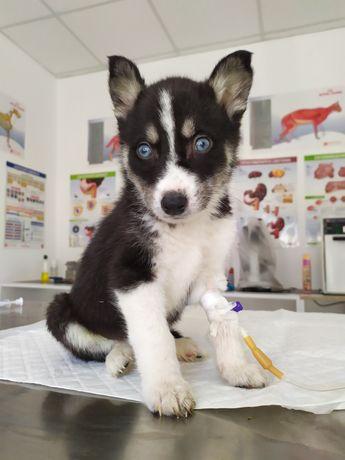 Ветеринарна допомога Vet-Service DUBNO