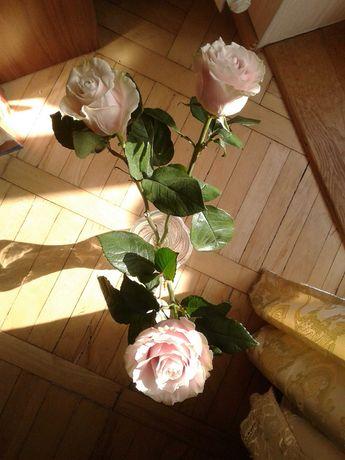 Букет из трех роз цветы розы роза