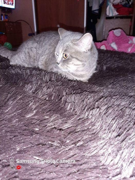 Кошечка Ася ищет добрых и любящих  хозяев Кременчуг - изображение 1