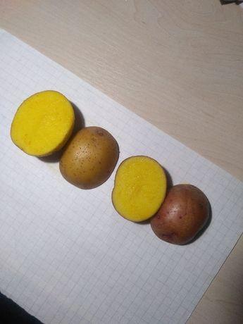 Продам смачну картоплю