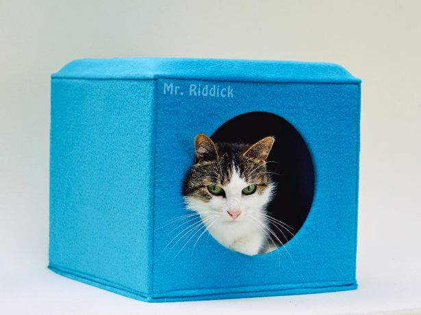 Komfortowa budka, domek dla kota i małego psa, kolor TURKUS