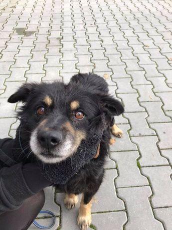 Vico - śliczny pies szuka domu