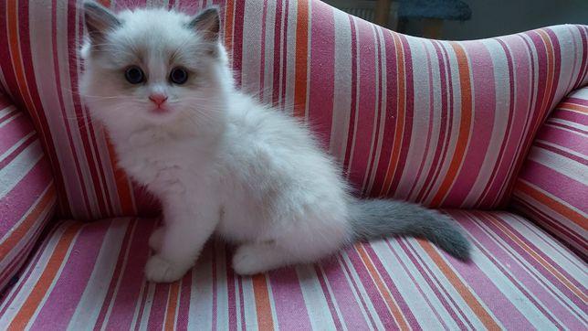 Evo, maluch o słodkich niebieskich oczach.