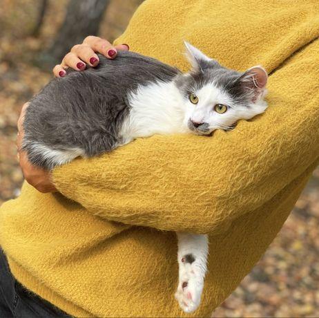 Котик в хорошие руки)