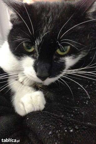 Bezdomna kotka Lana szuka domu