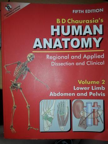 Анатомия человека (нижние конечности, живот и таз)