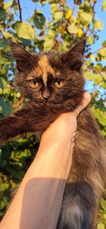 Отдам красивую девочку бесплатно. Котенок. Котята