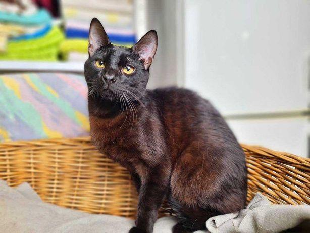 Котик Карат ждёт новую семью! Котенок 8 мес, черный кот, котята