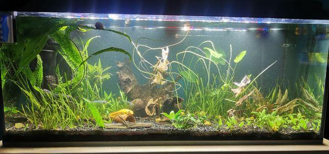 Akwarium 300l z szafką + filtr, grzałka, rośliny, obsada.