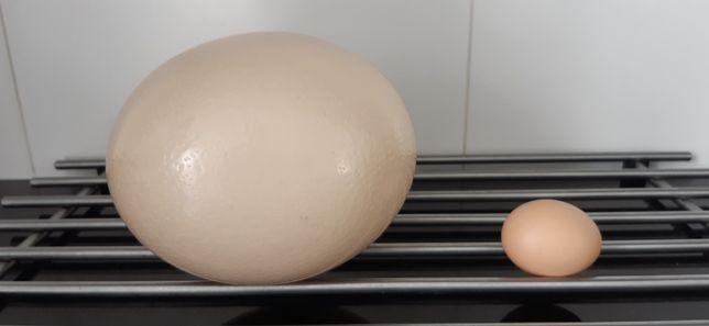 Ovos de avestruz