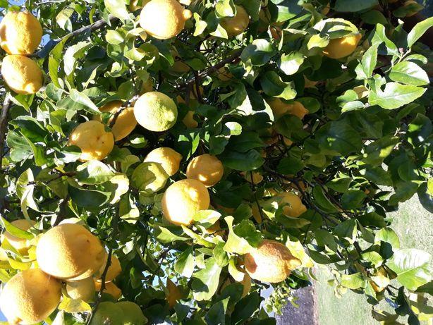 Limões naturais 1€ / kg