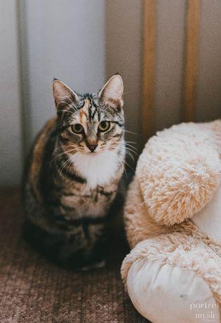 Dwie 8-miesięczne kotki Luna i Marlenka do adopcji