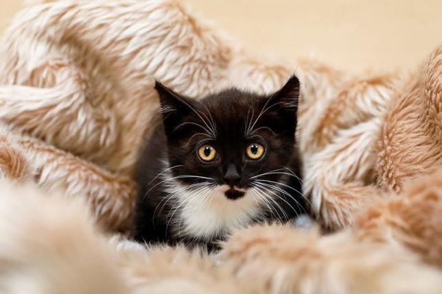 Daniela - 2-miesięczna, towarzyska koteczka
