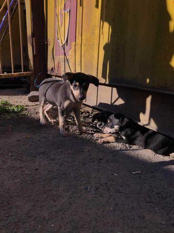 Помогите бездомным собачкам!