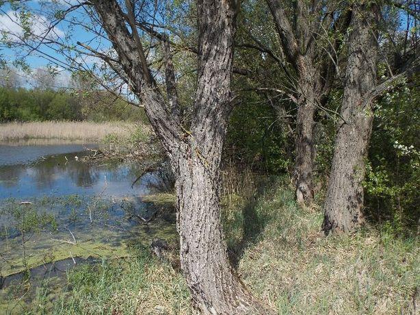 Продам земельный участок с. Бендюговка, Кагарлыкский район.