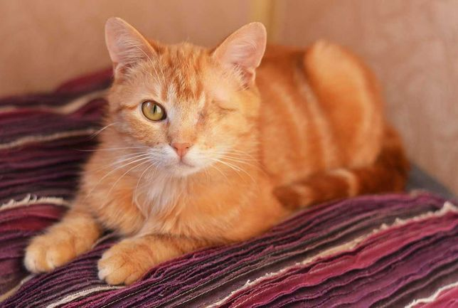 Cолнечный котик Соник в хорошие и добрые руки!
