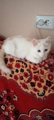 Котик-підліток шукає домівку та любляче серце.