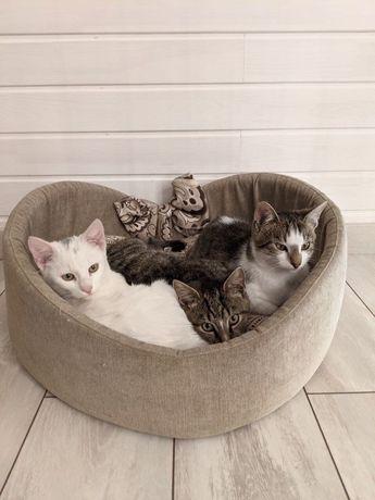 Кіт котик кошеня кот киця котейка