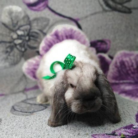 Декоративные кролики баранчики из питомника