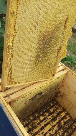 Пчёлопакеты на весну 2021
