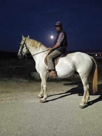 vendo cavalo, charrete, carroça e arreios