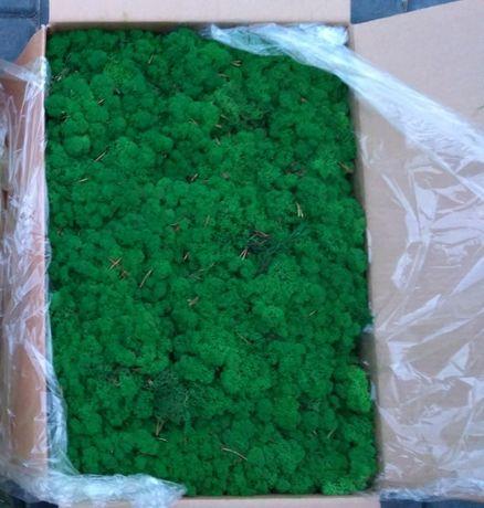 Мох ягель. Мох Норвегия. Стабилизированный мох. Цена за 500 грамм. Мох