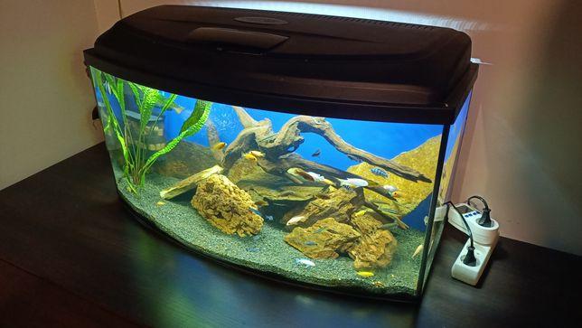 Akwarium Aquael 112 litrów panoramiczne pokrywa LED tło jak NOWE