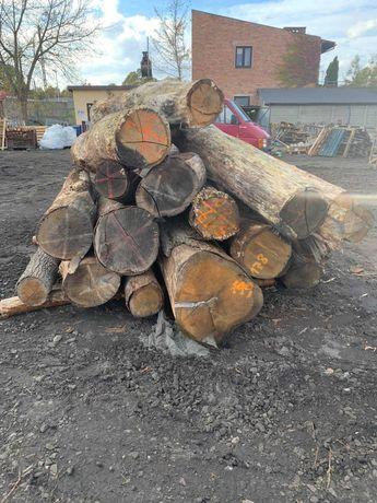 Drewno dąb od ręki śląsk drzewo grube
