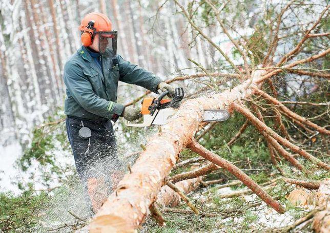 Wycinka drzew, ścinka drzew ,pięlegnacja zieleni , traników