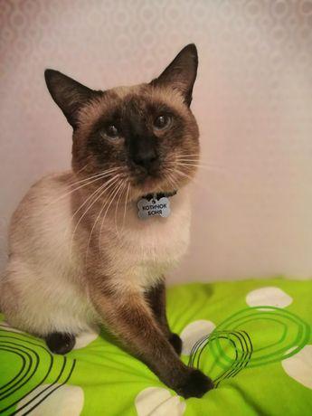 Вязка тайского кота