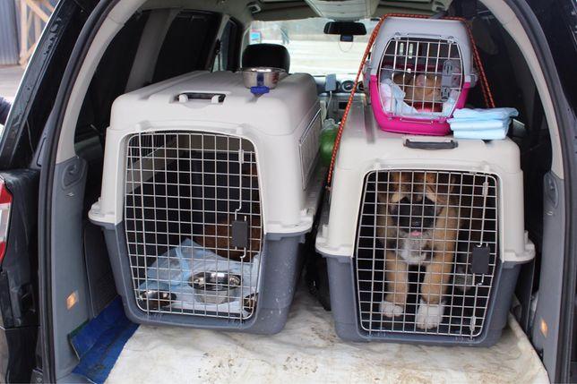 Доставка животных в Румынию