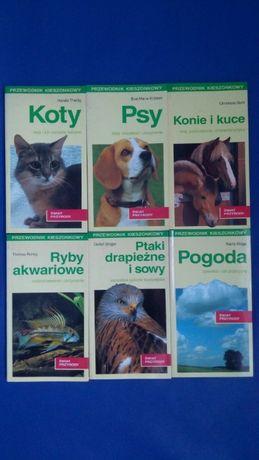 Książki - koty, psy, konie, ryby, ptaki, pogoda
