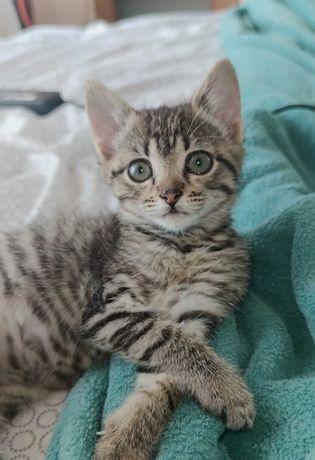 Oddam miłą kotkę