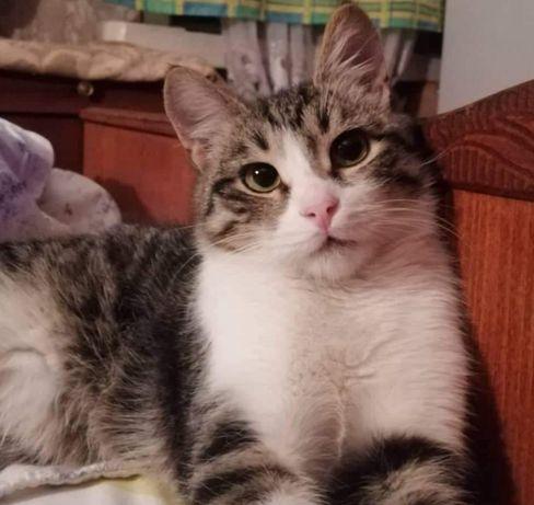 МАРКИЗ- класнючий молодой котик