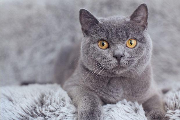 Котик ждет встречи