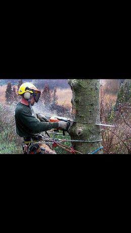 Scinanie drzew alpinistycznie wycinanie wycinka ścięcie drzewa na ROD