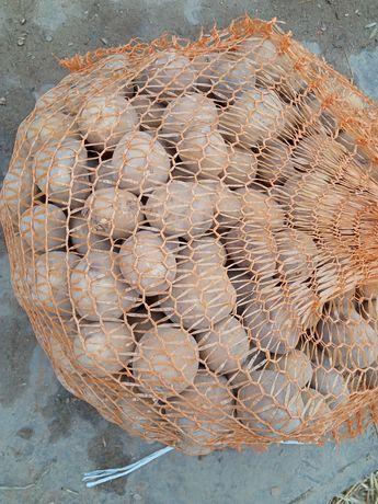 Ziemniaki jadalne paszowe, odpadowe