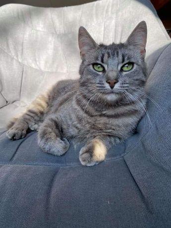 Віддам в добрі руки Таяна, киця, кіт