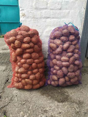 Продам велику картоплю