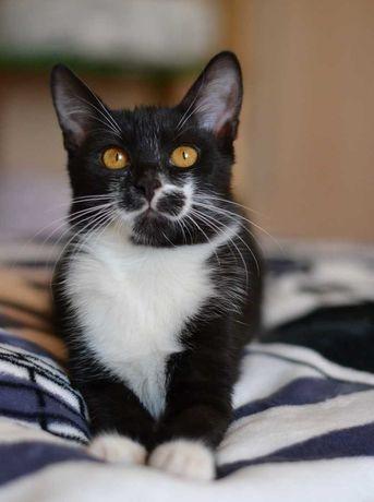 кумедний чорно-білий котичок 5м