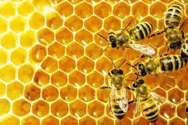 Соти бджолині продам