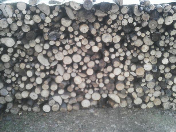 drzewo bukowe Okazja