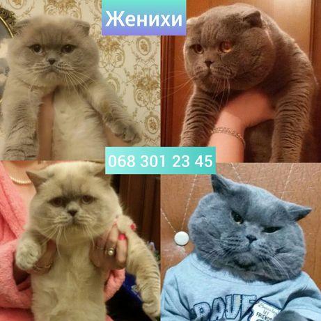 Коты женихи приглашают на свидания кошечек
