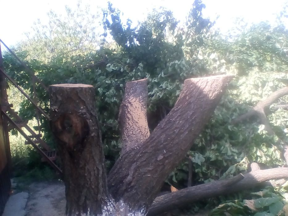 обрезка спил деревьев