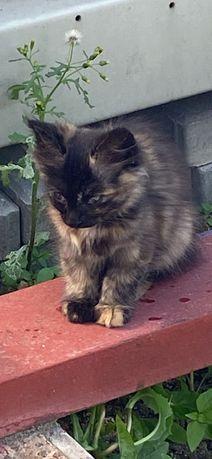Изумительные пушистые котята ищут дом