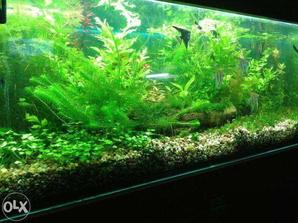 nawóz do roślin akwariowych uniwersalny 100ml