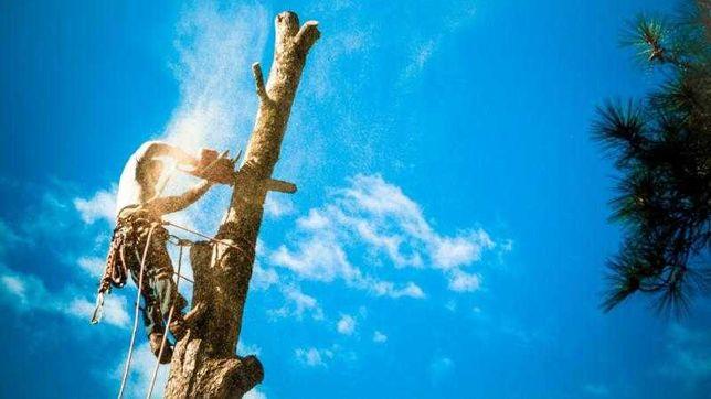 Wycinka drzew, Karczowanie, usuwanie pni rębak, koparka, wywrotka HDS