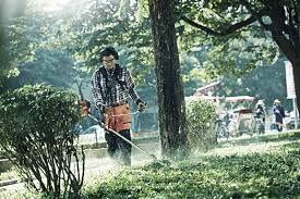 wykaszanie trawy