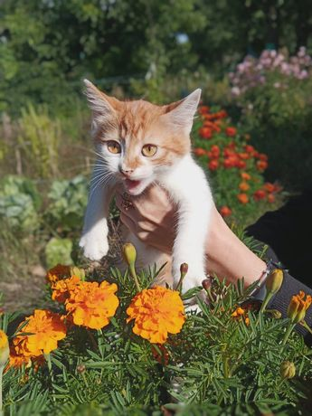 Котенок цвета осени!